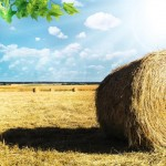 O jedną akcję za daleko? Zmiany w ustroju rolnym.