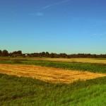 Dlaczego państwo prawa jest ważne dla wzrostu gospodarczego? O handlu ziemią.