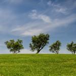 Łatwiejsza wycinka drzewa? Dobre intencje, ale patologiczny proces legislacyjny